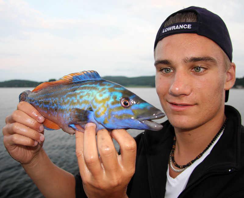 Håller fiskfångst i handen