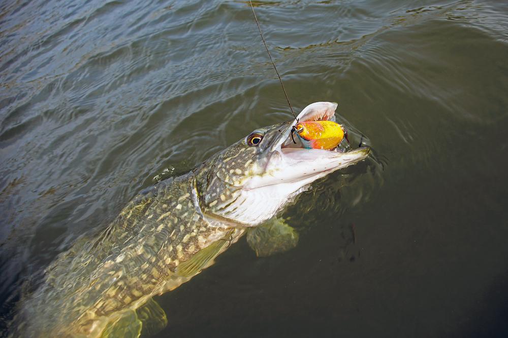 Fantastisk Tips vid spinnfiske | Sportfiskarna CQ-18