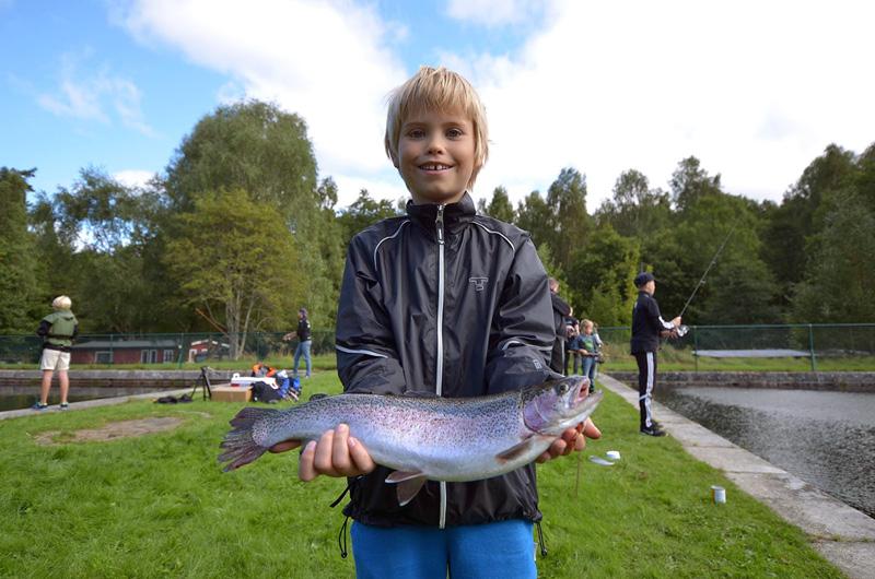 Rekordmånga unga fiskar!