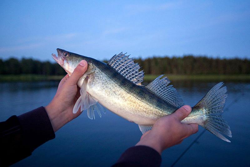 Många nya fiskevatten på Fiskekort.se