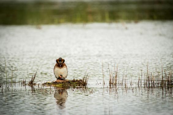 Kyrksjön, en flygande succé