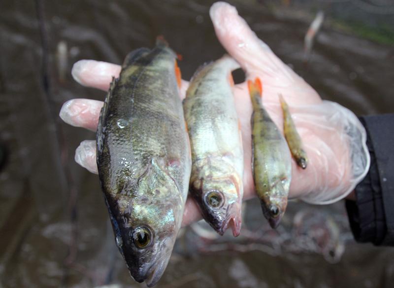 Dating hem sida liten fisk koppla upp meddelandeapp