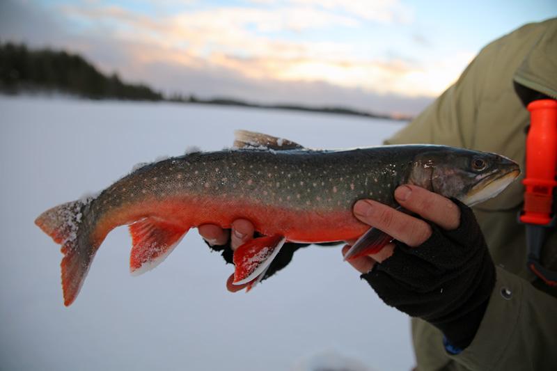 Isfiske efter röding