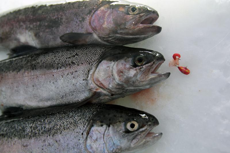 Isfisket på Värmdösjöarna stängt