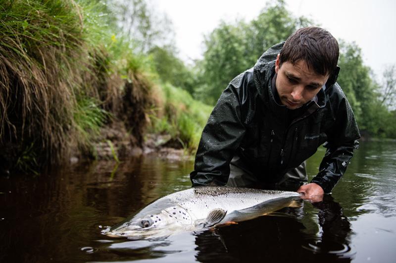 Dispens för rekordtidigt laxfiske i Råneälven 2016