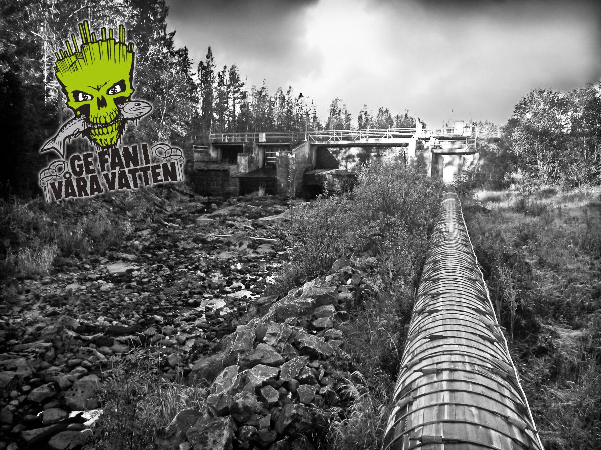 Ge fan i våra vatten ger pengar till rivning av två kraftverksdammar