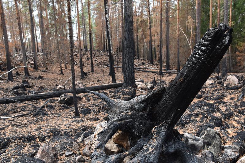 Skogsbrand ingen långvarig katastrof för vattenmiljön