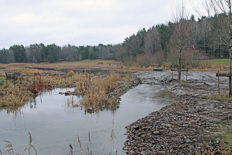 Munk förbättrar gäddfabriken i Hemmesta sjöäng