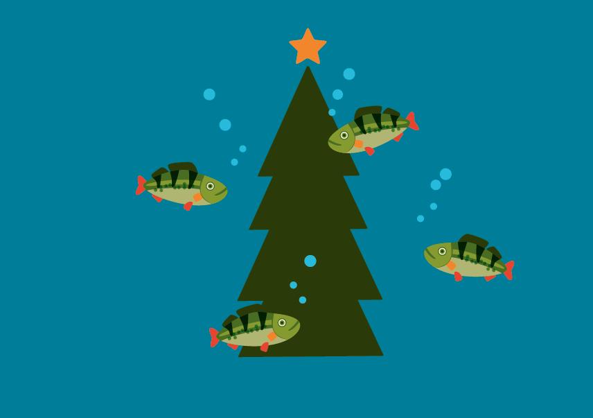Långsjö Gömmarens Fiskeförening slänger julgranarna i sjön!
