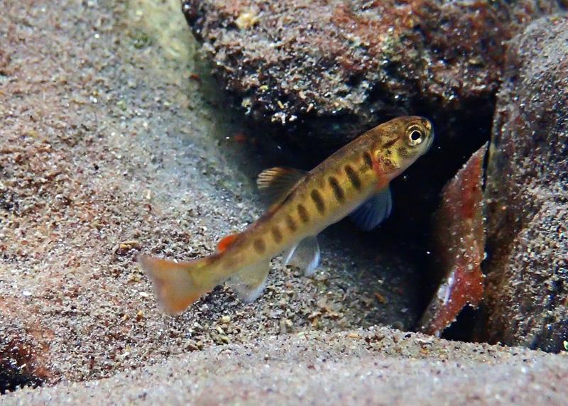 Tio fiskevårdsprojekt stöttas av fiskevårdsfonden