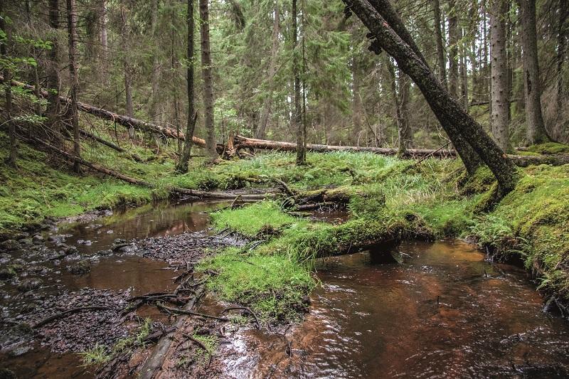 Naturliga flöden förbättrar vattenhushållningen