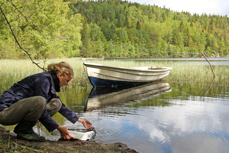 Mer åtgärder krävs för det hotade ålbeståndet