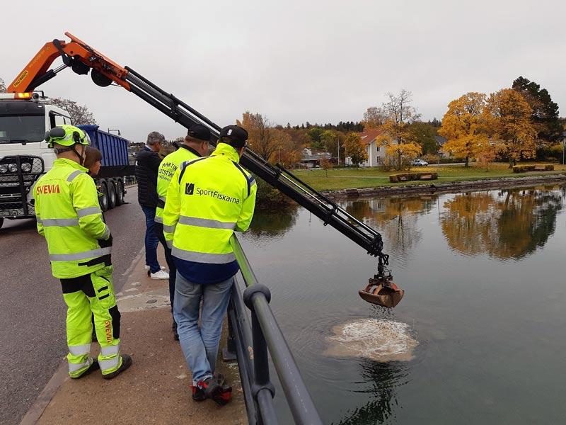 Jubileumsfonden stöttar fiskevård: Vätterharr återfår lekplats i Motala ström