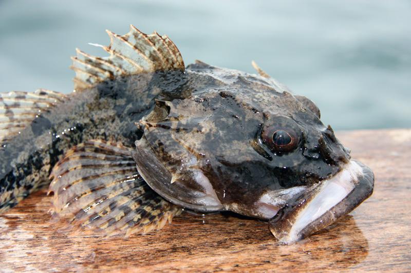 Fiske och marint liv i Öresund!