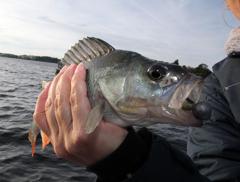 Ny rapport om fritidsfisket från HaV