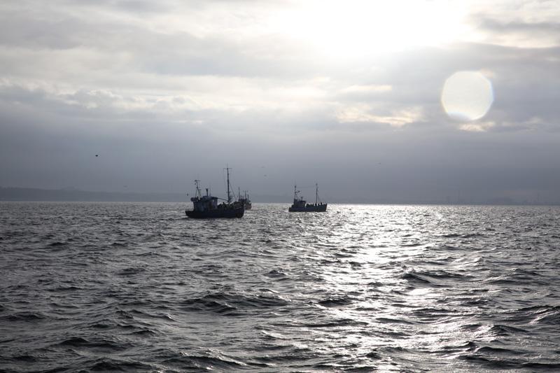 Rösta för fisken i EU-valet 26 maj