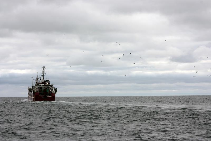 Akut nödläge för fiskbestånden på Västkusten