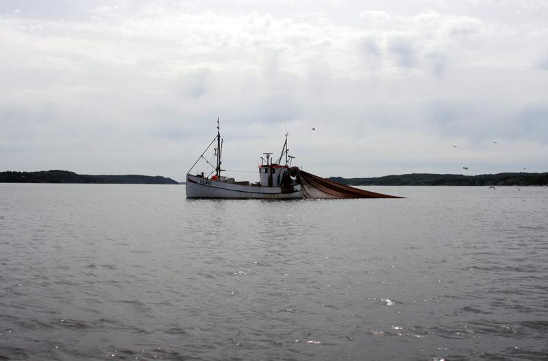 Forskare och yrkesfiskeföreträdare oense om överfisket i Västerhavet