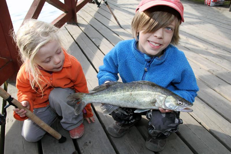 Tips: upp till 19 fiskar gratis på Sporfiskekortets vatten
