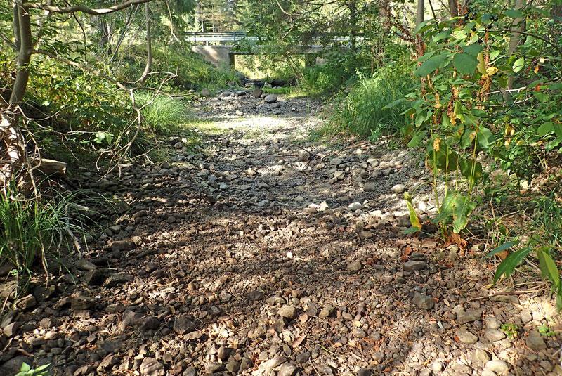 Katastrofal torka på Gotland - men Sportfiskarna jobbar för mer vatten
