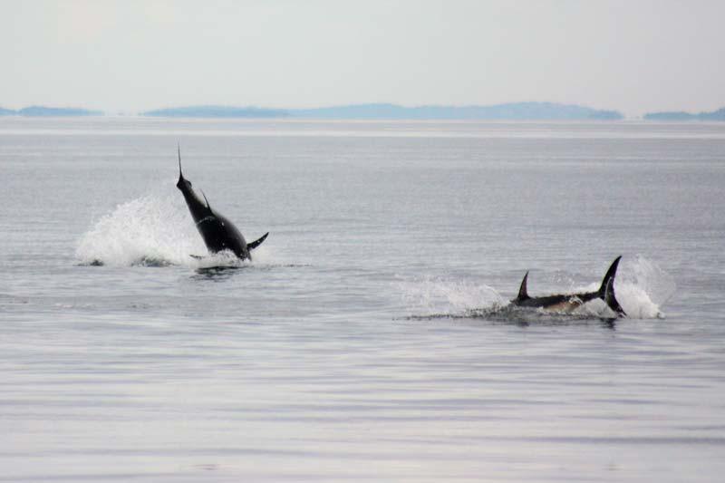 Kallelse till årsmöte 2020 för Sportfiskarna Halland