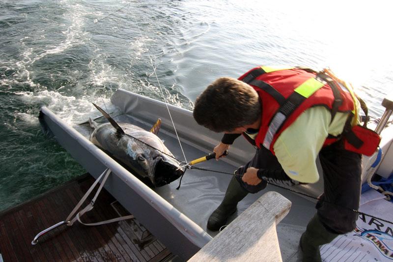SVT uppmärksammar tonfiskmärkning