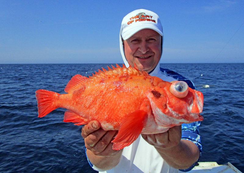 Två nya sportfiskerekord från havet