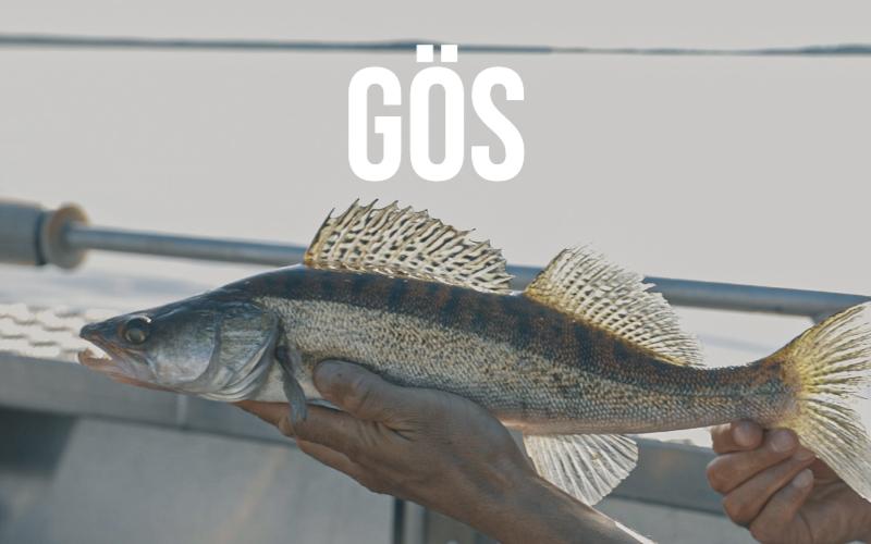 Nu släpps del 3 av Sportfiskarnas artfilmer och arthäften