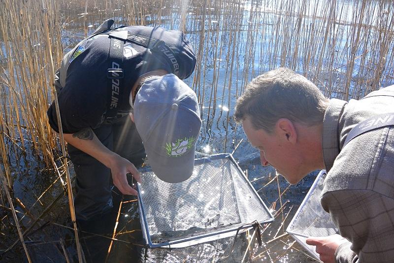 Sportfiskarna inventerar gäddyngel i Nordre och Göta älv