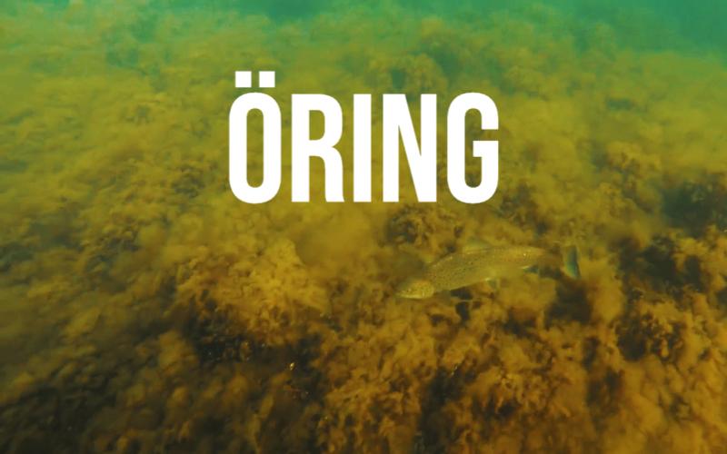 Sportfiskarnas artfilmer och arthäften: öring