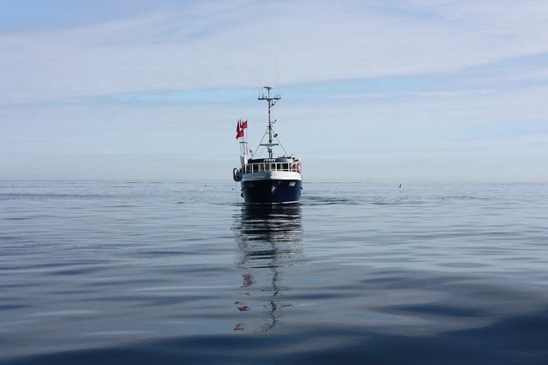 ICES råd för 2021 – fortsatt kris för Västerhavets torskbestånd