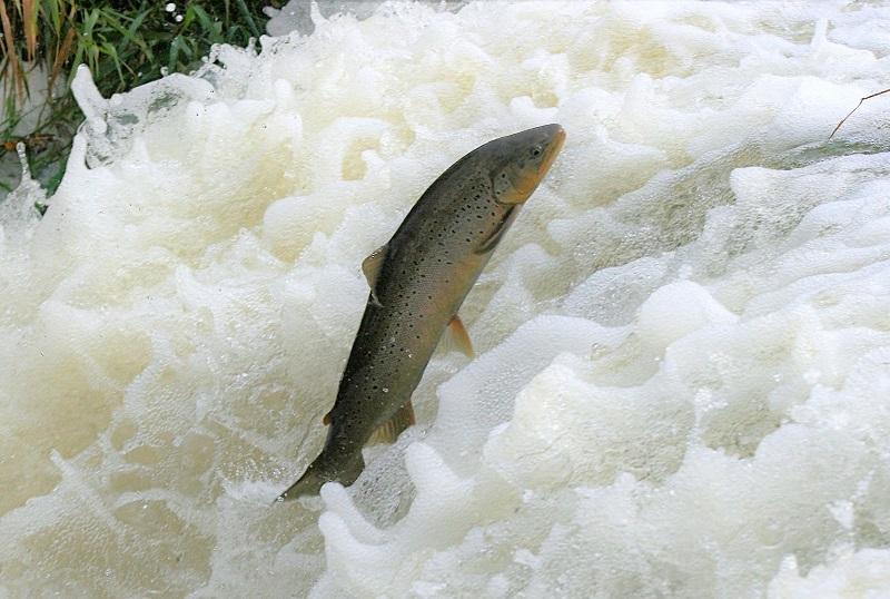 Catch & Release stödjer Sportfiskarnas miljöarbete