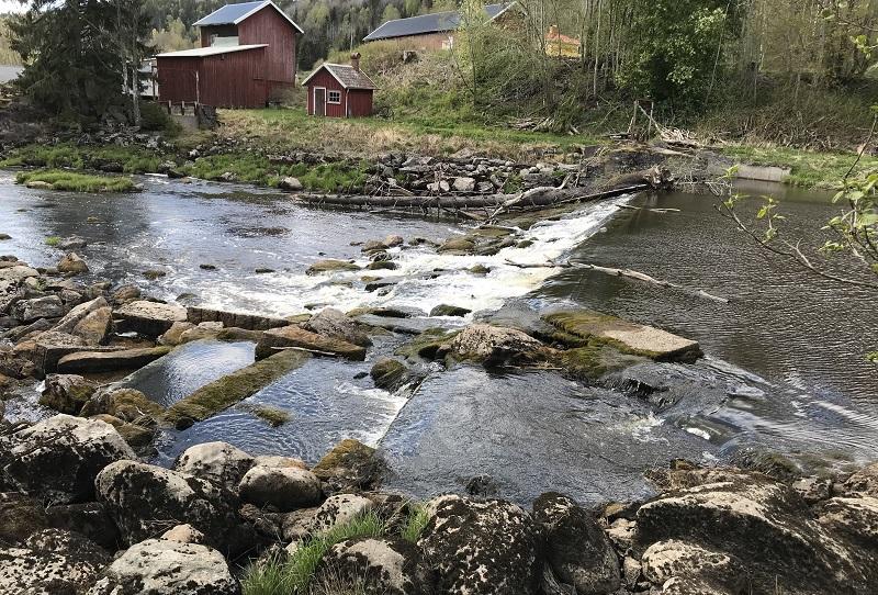 Sportfiskarna projekterar dammutrivning i Örekilsälven