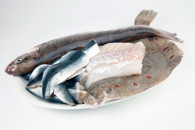 Jobbtips: WWF söker en sakkunnig i fiskefrågor