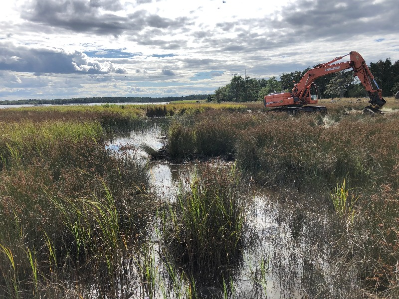 Fiskevård på Öland: lekområde åter tillgängligt vid Grankullavik