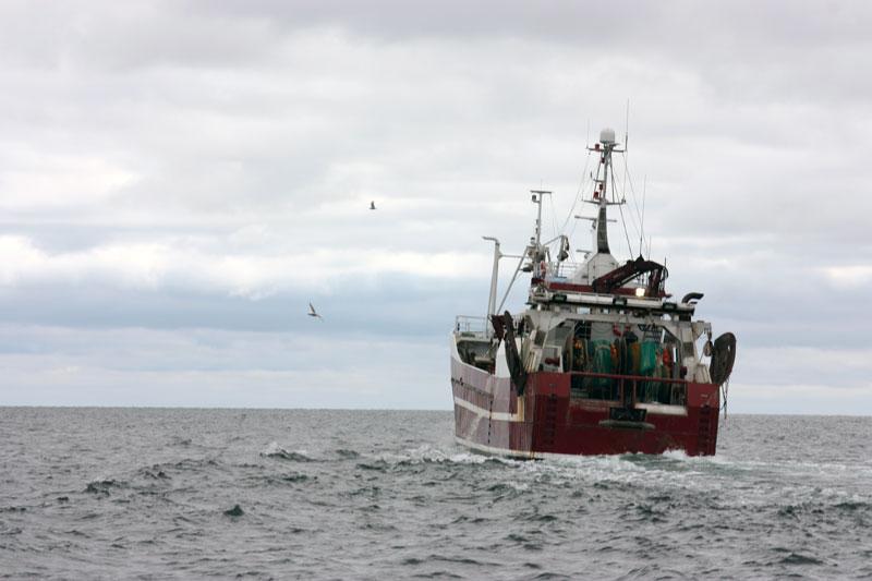 Olagliga utkast fortsätter vid trålfiske