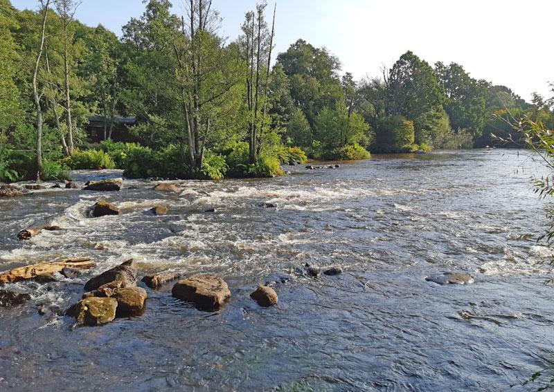 Sportfiskarna söker restaureringsexpert till Mörrumsån
