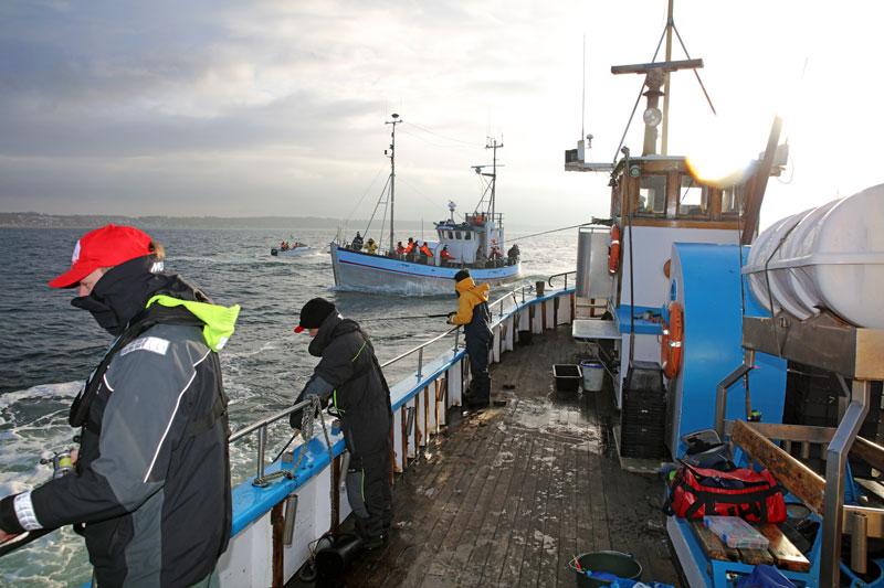 Sportfisket efter torsk och lax regleras hårdare