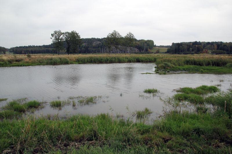 Miljoner försvinner från våtmarkssatsningar