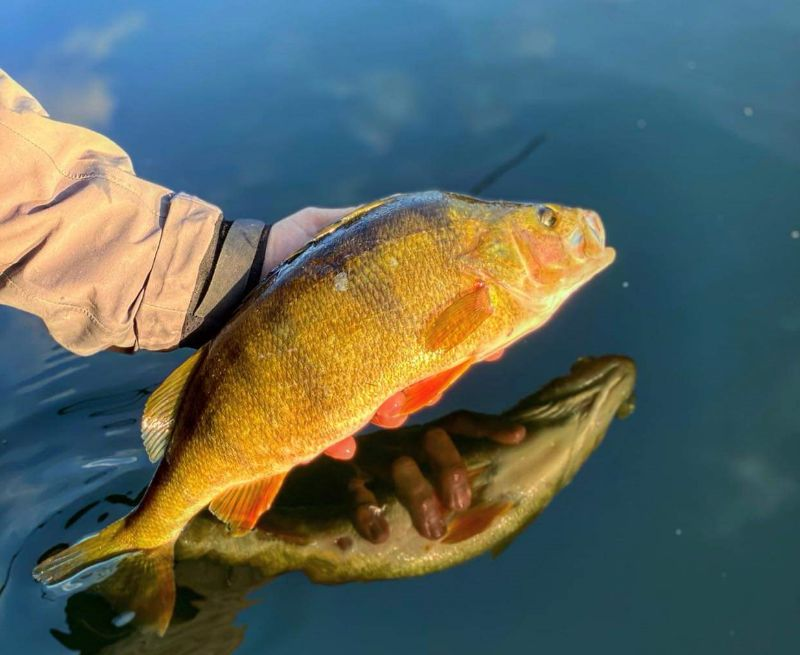 Sportfiskarna försvarar fisket i Malmö kanal