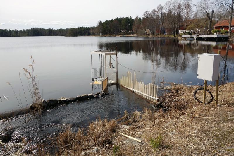 Följ fiskvandringen i Björkeån