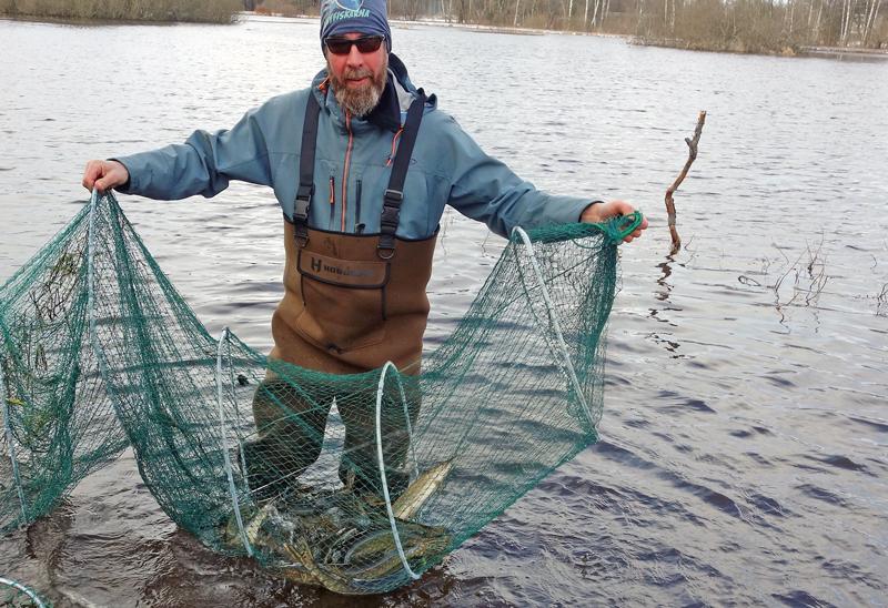 Fiskevård fungerar: gäddexplosion i Järvsta Sjöäng