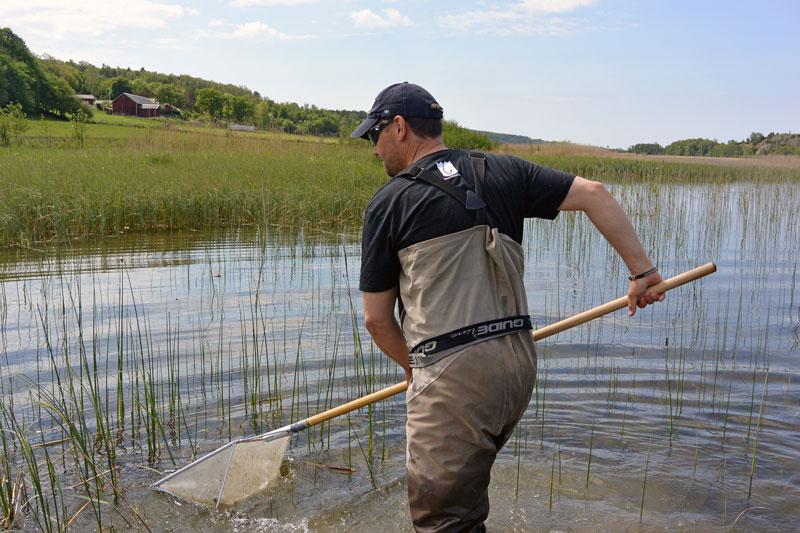 Inventering avslöjar kris för gäddan i Göta och Nordre älv