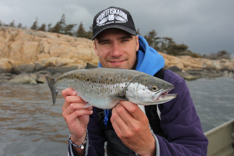Lyckad premiärvecka för öringfisket på västkusten