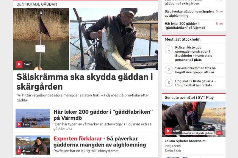 Stort fokus på gädda på SVT