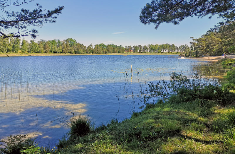 Sigvalde träsk - nytt fiskekortsvatten på Gotland