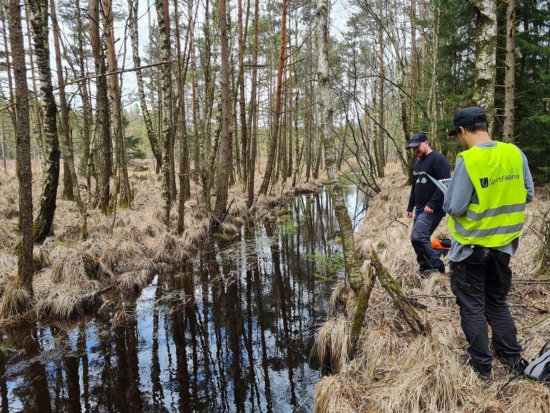 Sportfiskarna fiskevårdar för flodpärlmussla och öring i Lärjeåns vattensystem