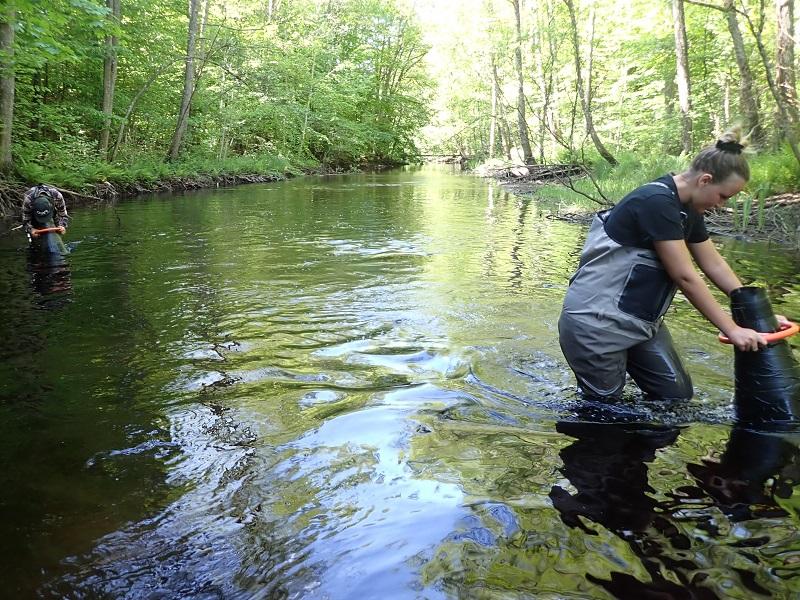 Sportfiskarna återintroducerar flodpärlmussla i Kronobergs län