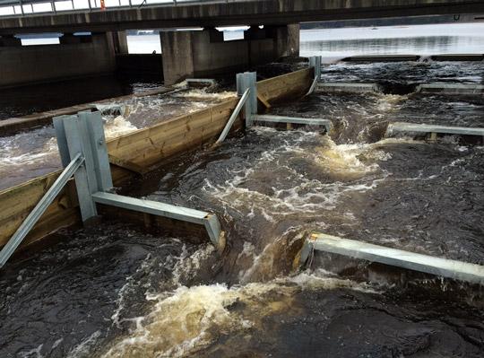 Vattenfall förbättrade fiskväg i Dalälven