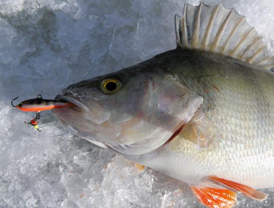 Häng med på fiske landet runt!